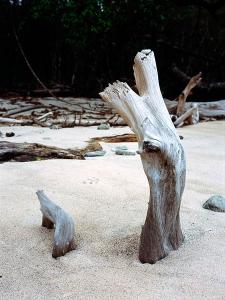 http://www.michaelmeyerphoto.com/files/gimgs/th-11_11_cabo-blanco-driftwood.jpg