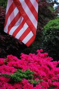 http://www.michaelmeyerphoto.com/files/gimgs/th-11_11_flagflowers1404.jpg