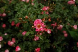 http://www.michaelmeyerphoto.com/files/gimgs/th-11_11_flower7342.jpg